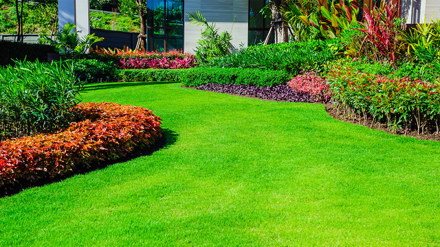 Water your lawn the right way with these tips