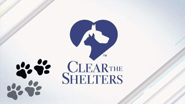 More than 1,100 animal shelters join with NBC, Telemundo stations to host Clear the Shelters™ Day