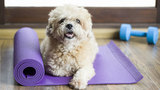 How to exercise your dog in your home