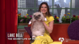 'Secret Life of Pets' Stars Urge You to Help Clear the Shelters