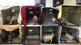 20 Dogs Found Dead, Nearly 200 Rescued From NJ Nightmare