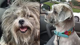 Stolen Dog Reunited With Family After Two Years